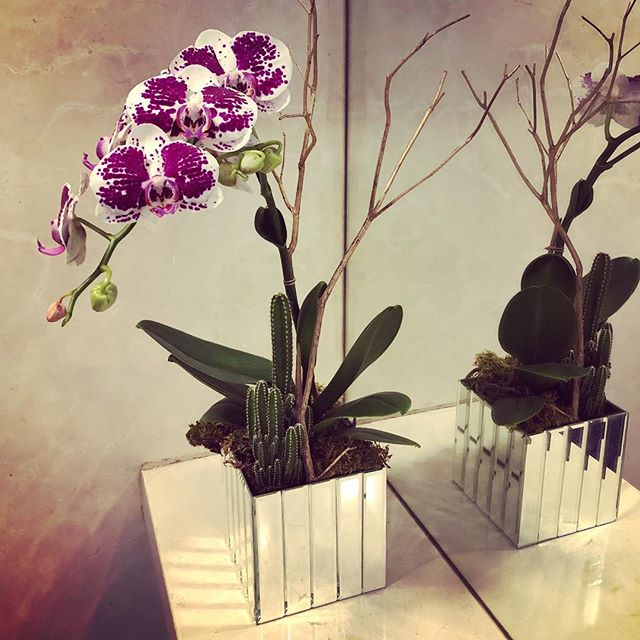 We offer #orchid #plants #bydweeklies #nyc #flowerdelivery