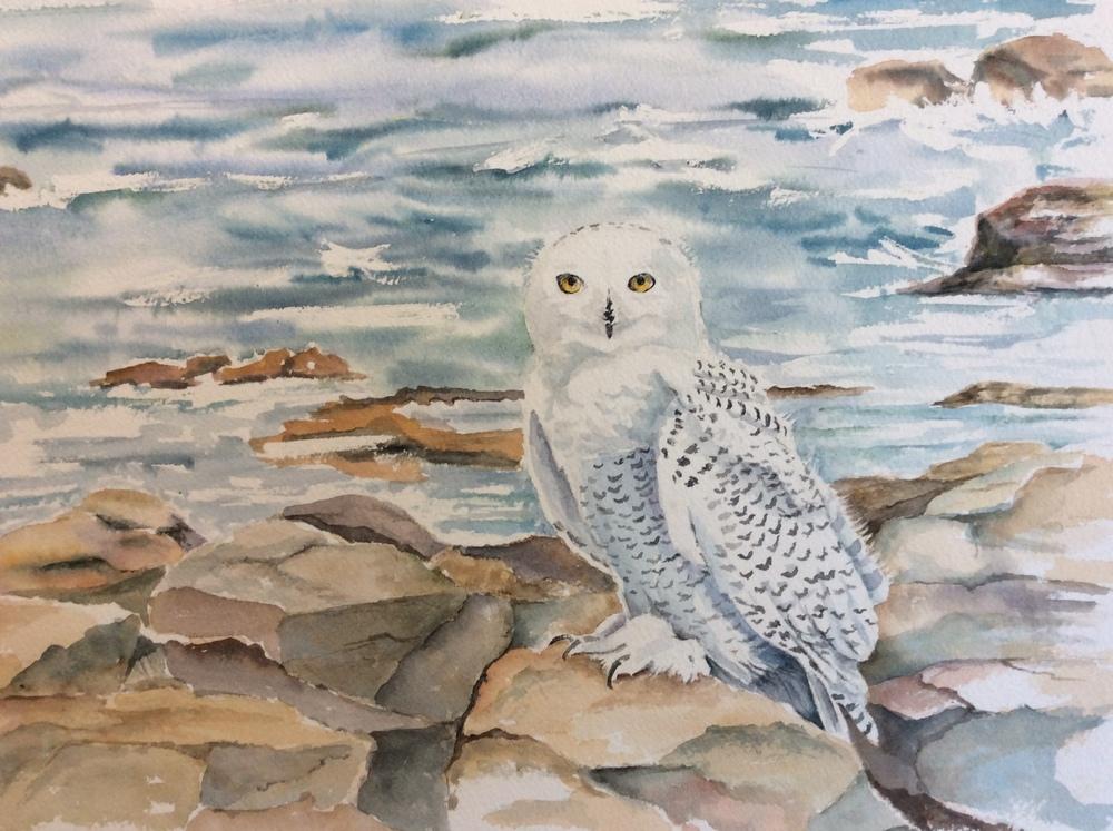 Snowy Owl      NFS