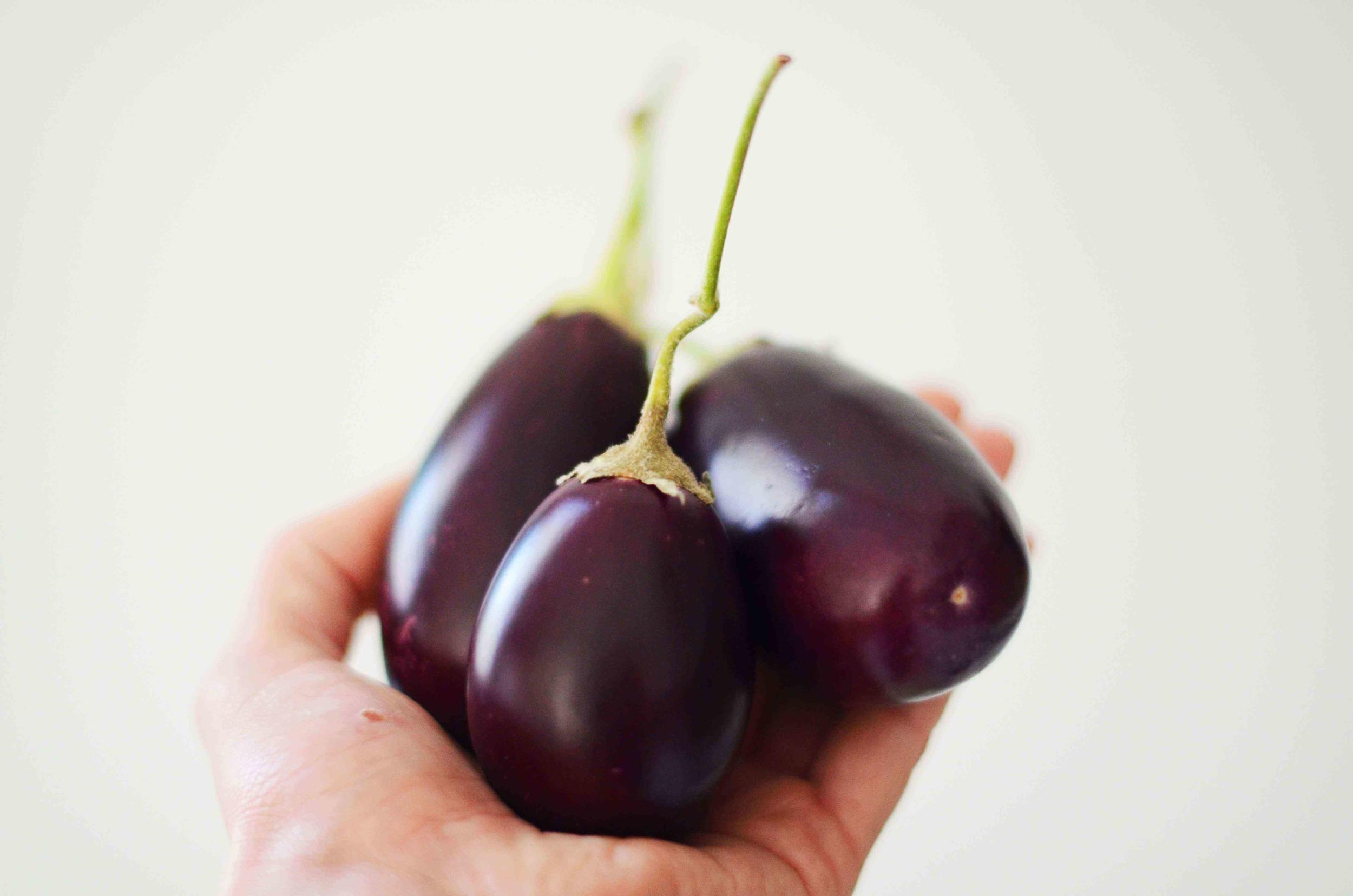 eggplant-6 LQ