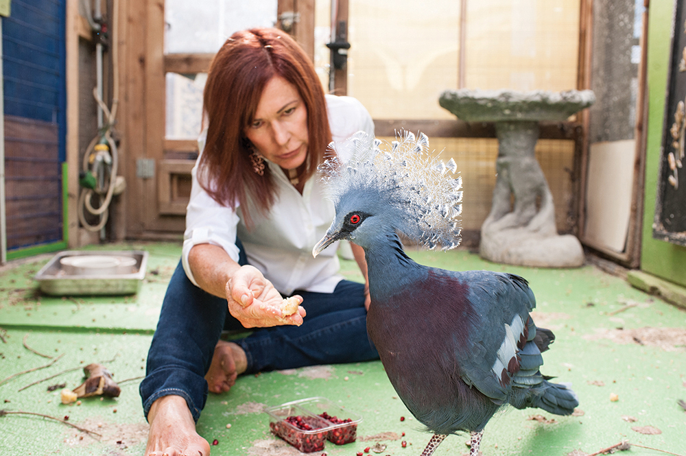 Raffin feeds a Victoria Crowned pigeon.