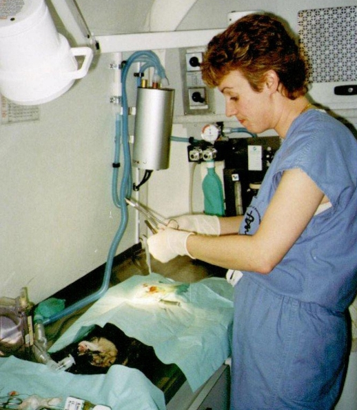 Inside CHAI's mobile spay/neuter clinic.