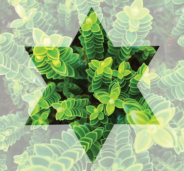 Passionate about Eco-Judaism — JWI