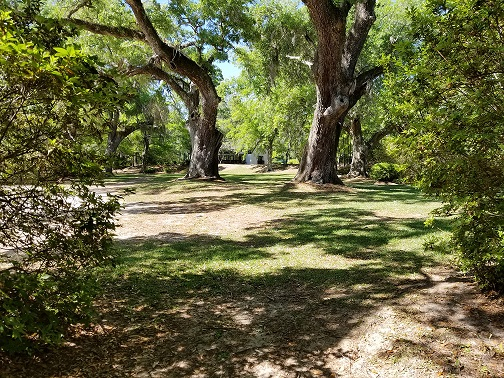 Photographers love the contrast interest provided by stately live oaks.