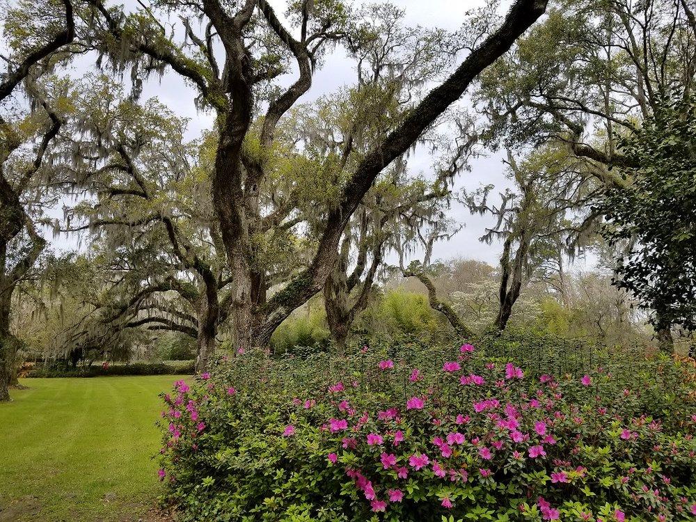trees&azaleas.jpg