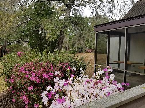 Rice Canal entrance azaleas.jpg