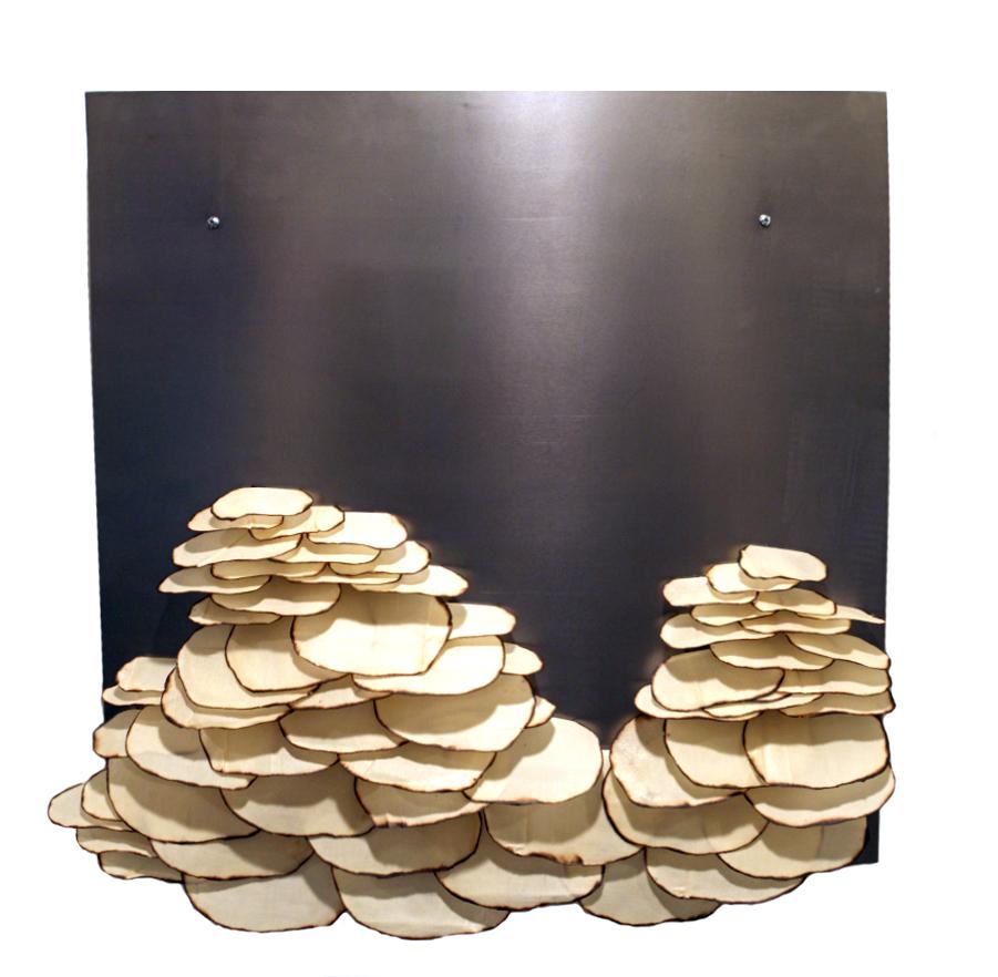 Flat Pancake Mushrooms.jpg
