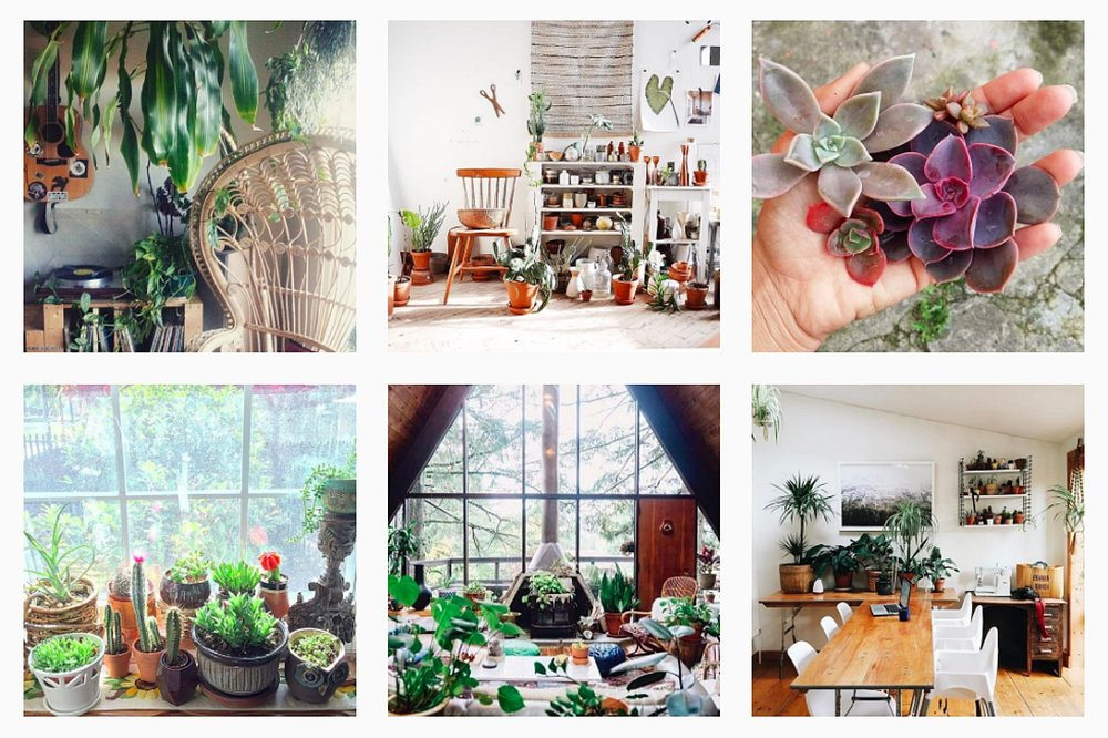 urban-jungle-bloggers-instagram