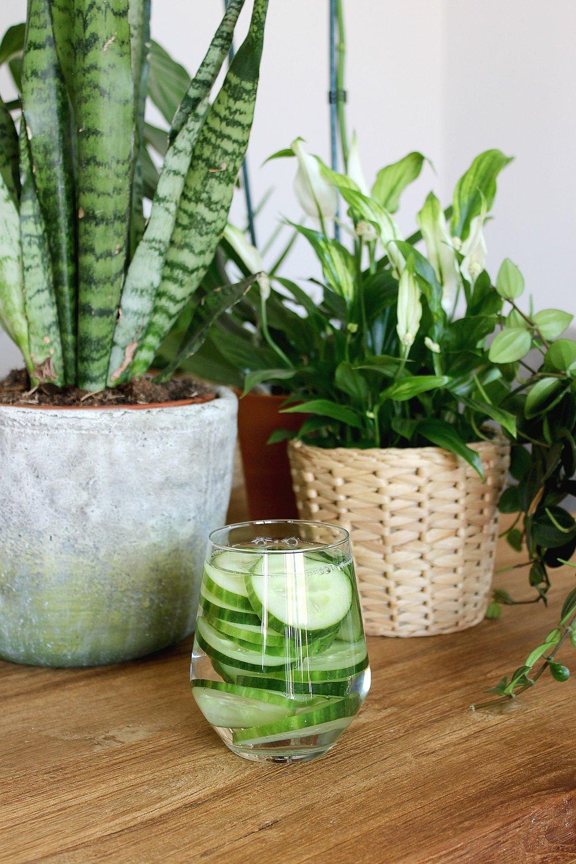 cucumber-glass-water-plants-1.jpg