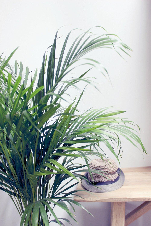 bigjungleplant-2.jpg