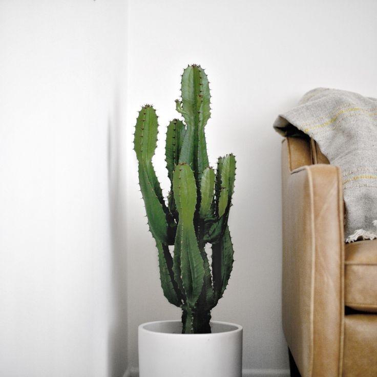 a tall cactus -