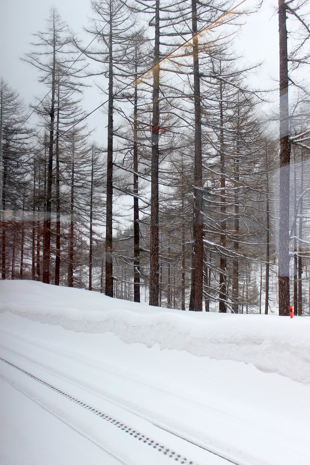 snow-train-tasch-zermatt-trees.jpg