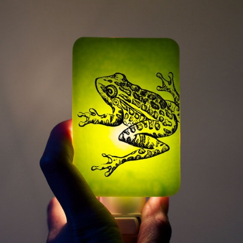 Frog Nightlight [$42] by way of Happy Owl