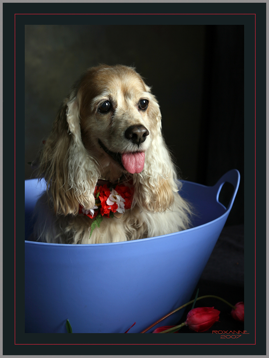 ROX DOG IN BLUE BUCKET.jpg