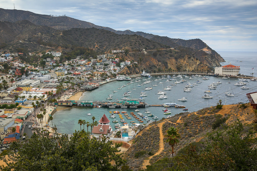 One day just isn't enough when you visit Catalina Island. Last summer we visited the well known city of Avalon graced by the famous Avalon Bay that faces the California coast. The bay, pier, city shops, restaurants and the iconic Catalina Casino with it's red roof (right side) are easily visited in a day but you should really experience a sunset and early sunrise before leaving. We took a small bus tour of the island and the Zip Line Eco tour, just over the hills,to get a better taste of what Catalina has to offer. Peaceful.