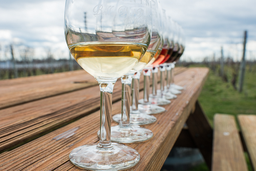 row of glasses of wine on table by vineyard