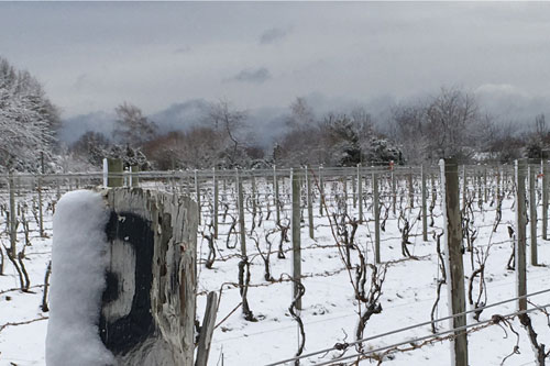 vineyard in the snow
