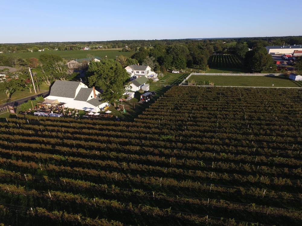 aerial image of the vineyard.jpg