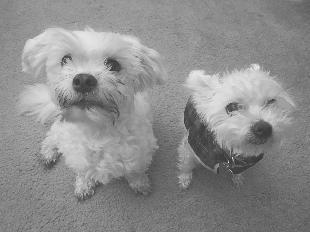 Armani (left) & Ivory (right).