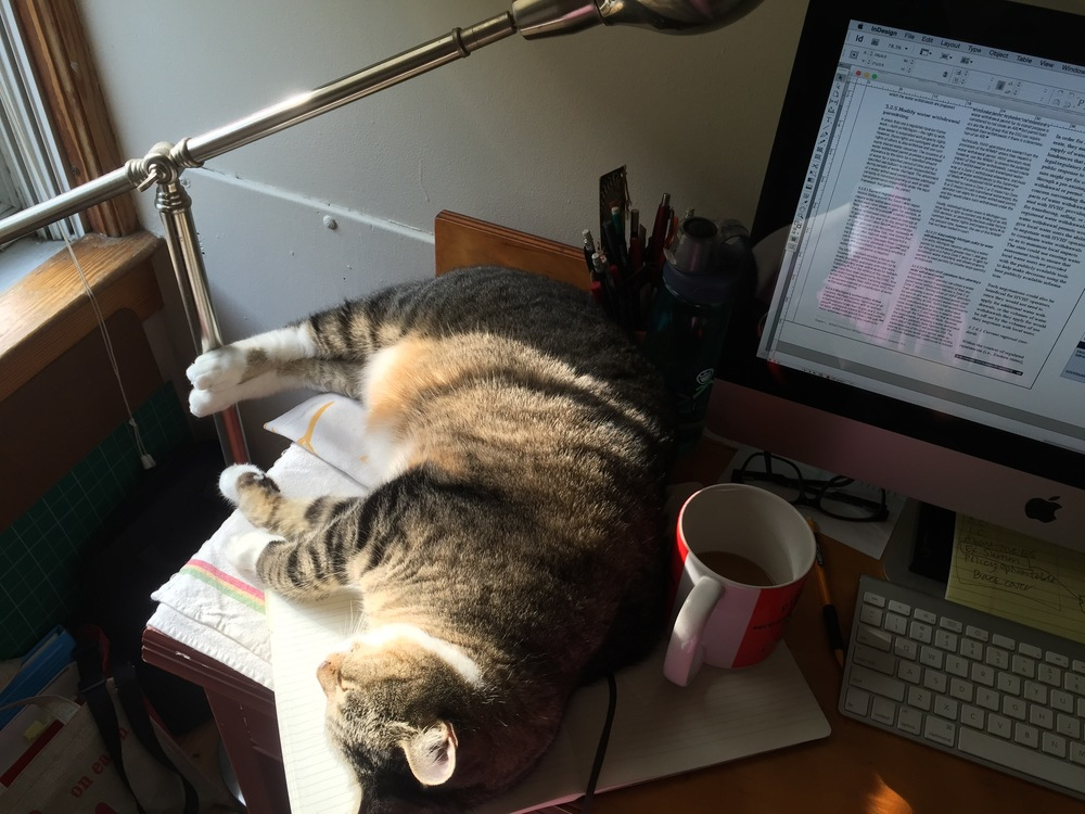 Desk space is at a premium when the kitty wants his sunshine.