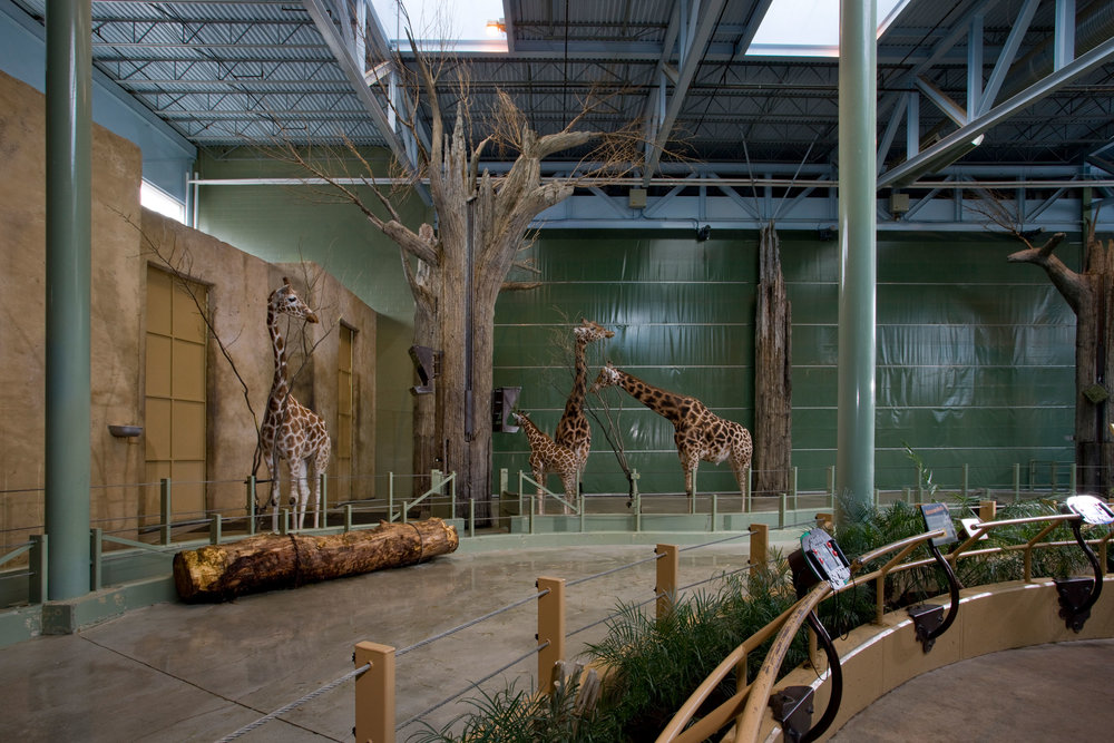 Destination Africa – Calgary Zoo