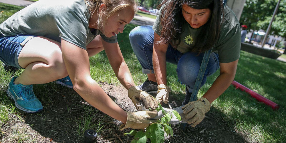 IPS 34 Planting.jpg