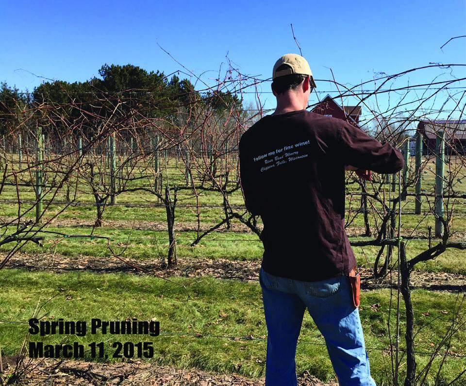 Al Pruning 3.jpg