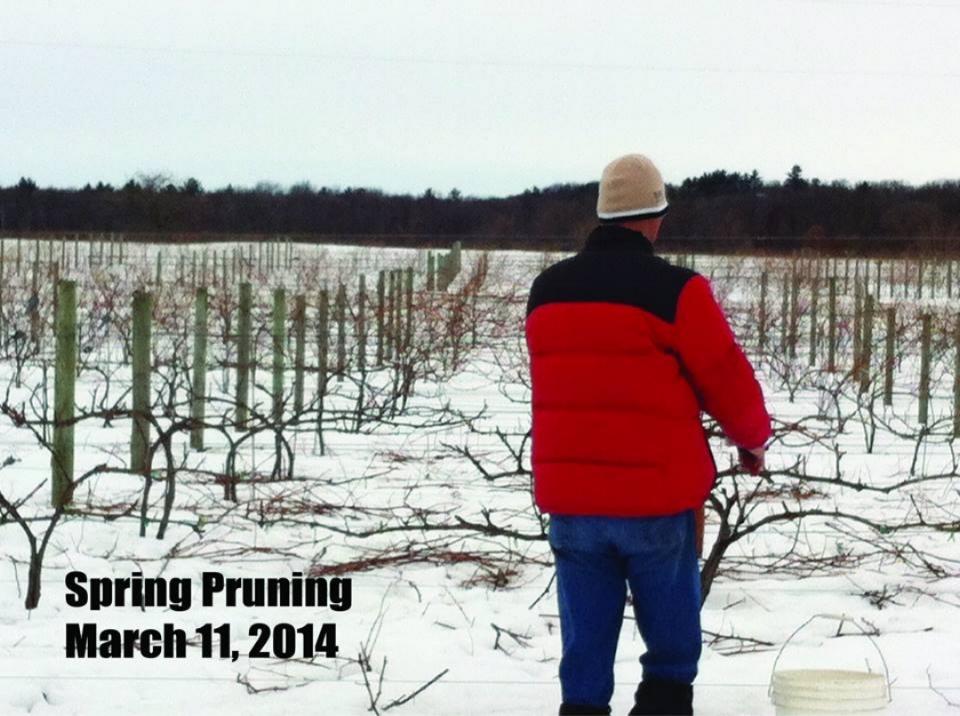 Al Pruning 4.jpg