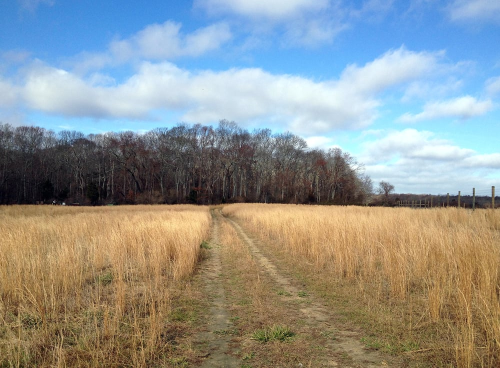 Road to the Amagansett farm field, NY