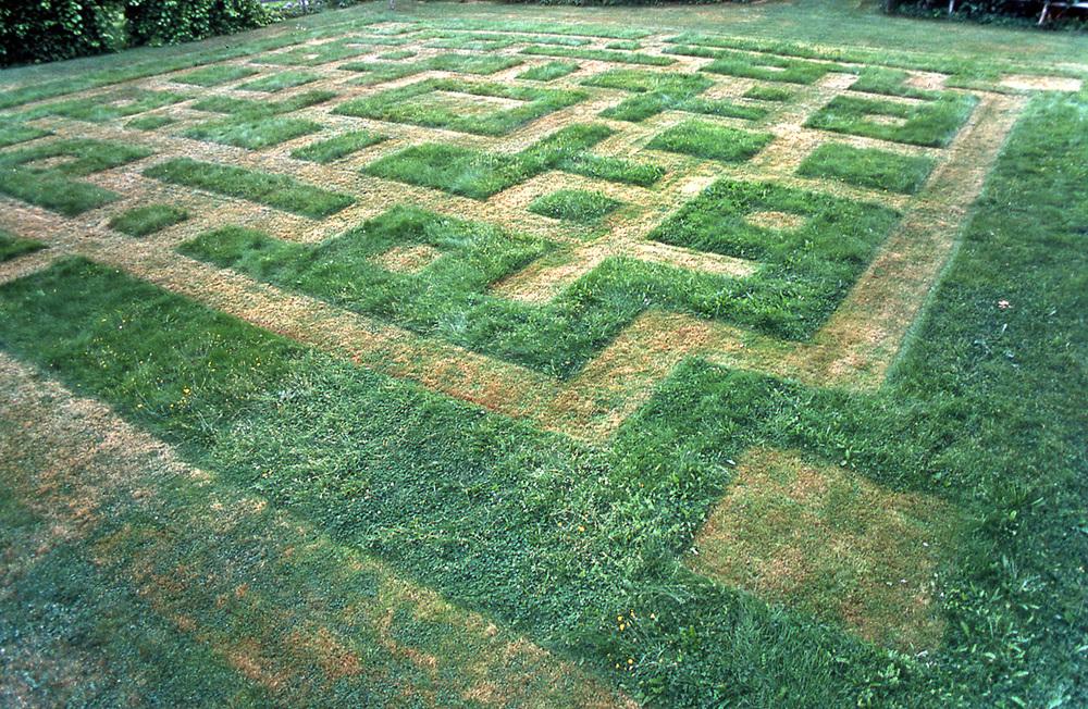 lawnwork3.jpg