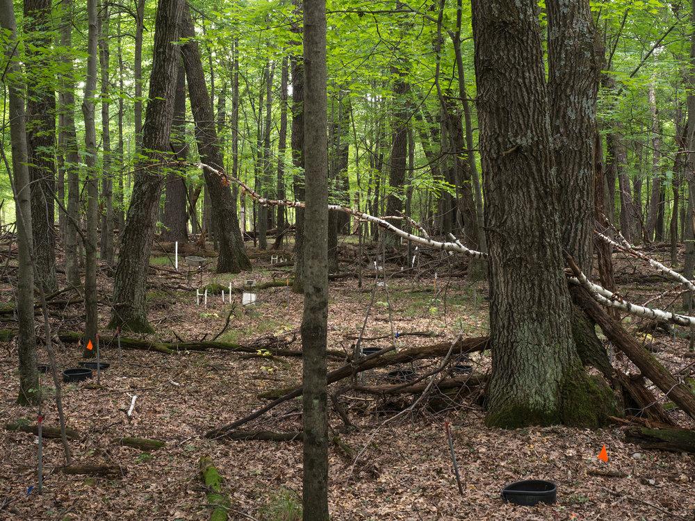 WoodsFlagsCylinders.jpg