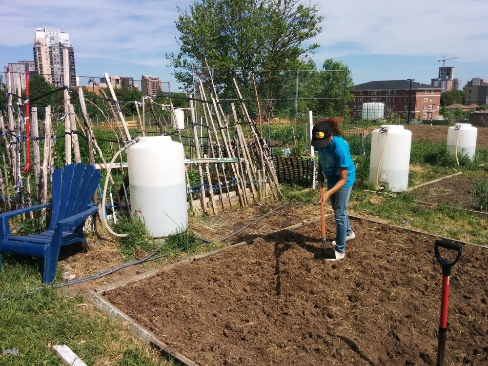 060116_Rhea Planting.jpg
