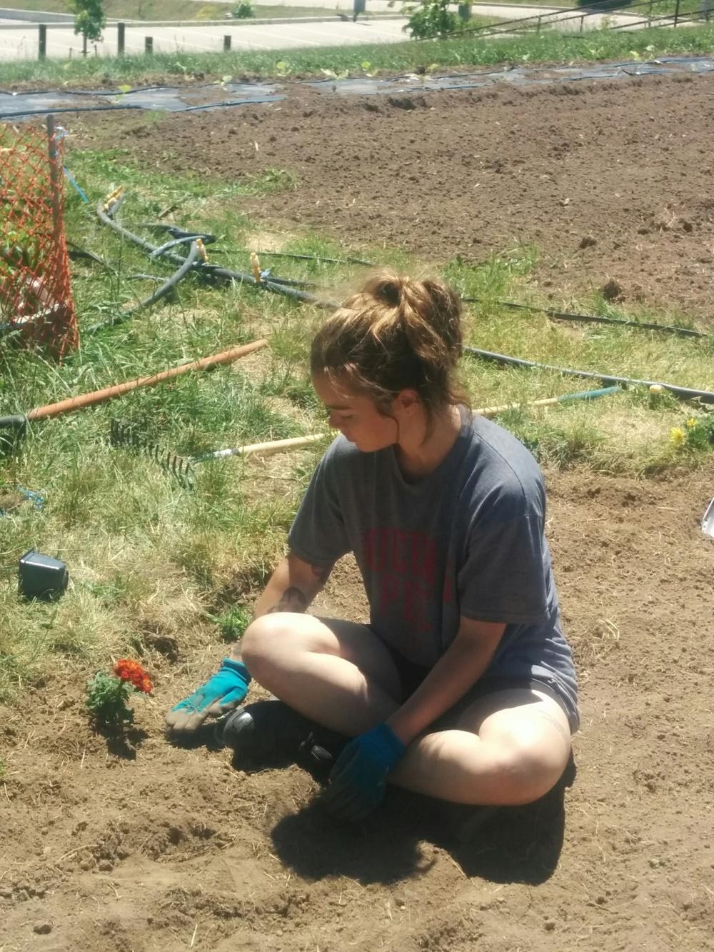 062216_Jessie Planting Marigolds.jpg