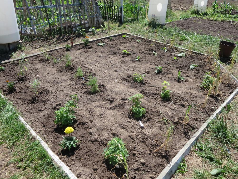 062216_Medicine Garden.JPG