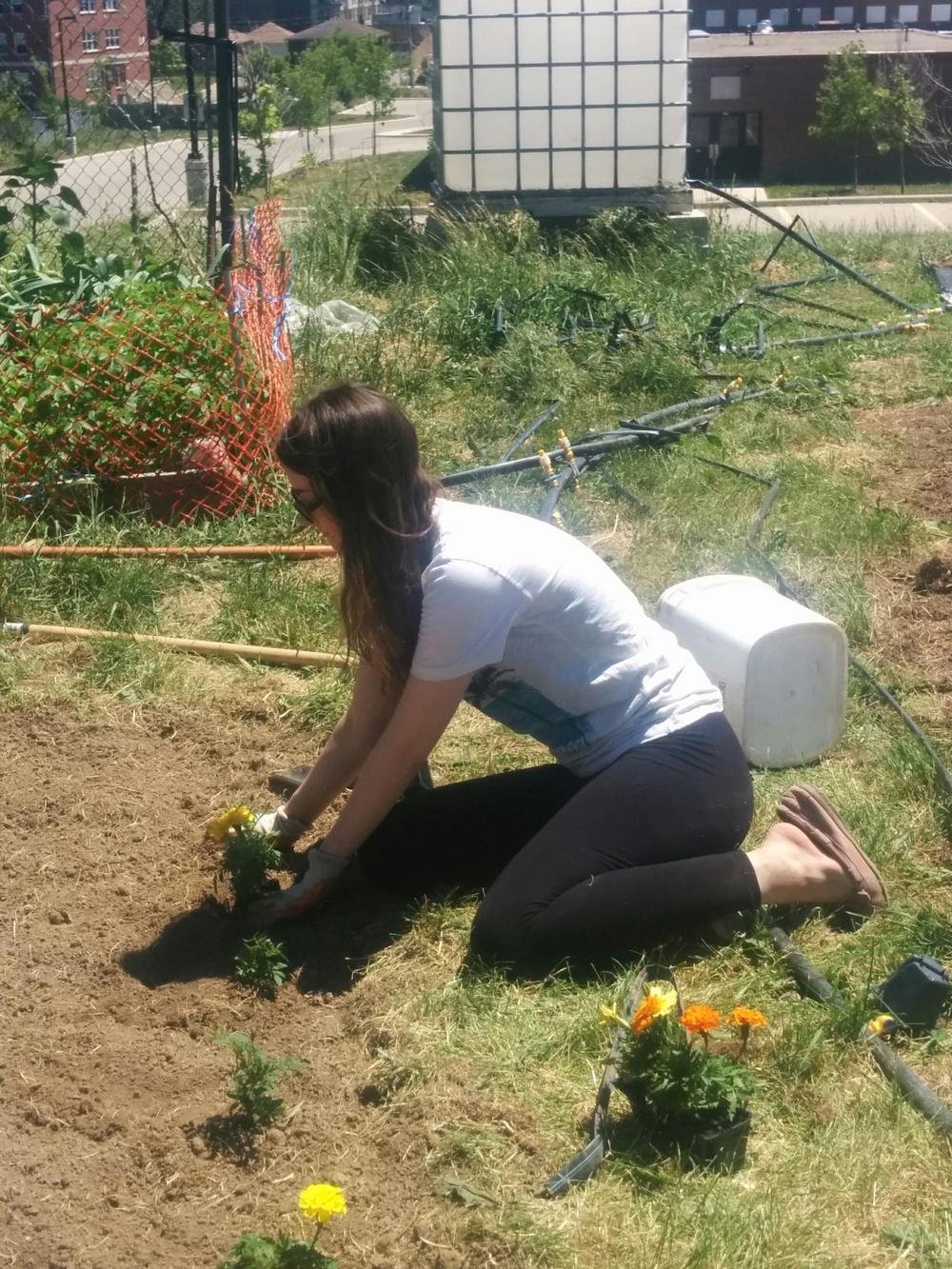 062216_Rebecca (Volunteer) Planting Marigolds.jpg