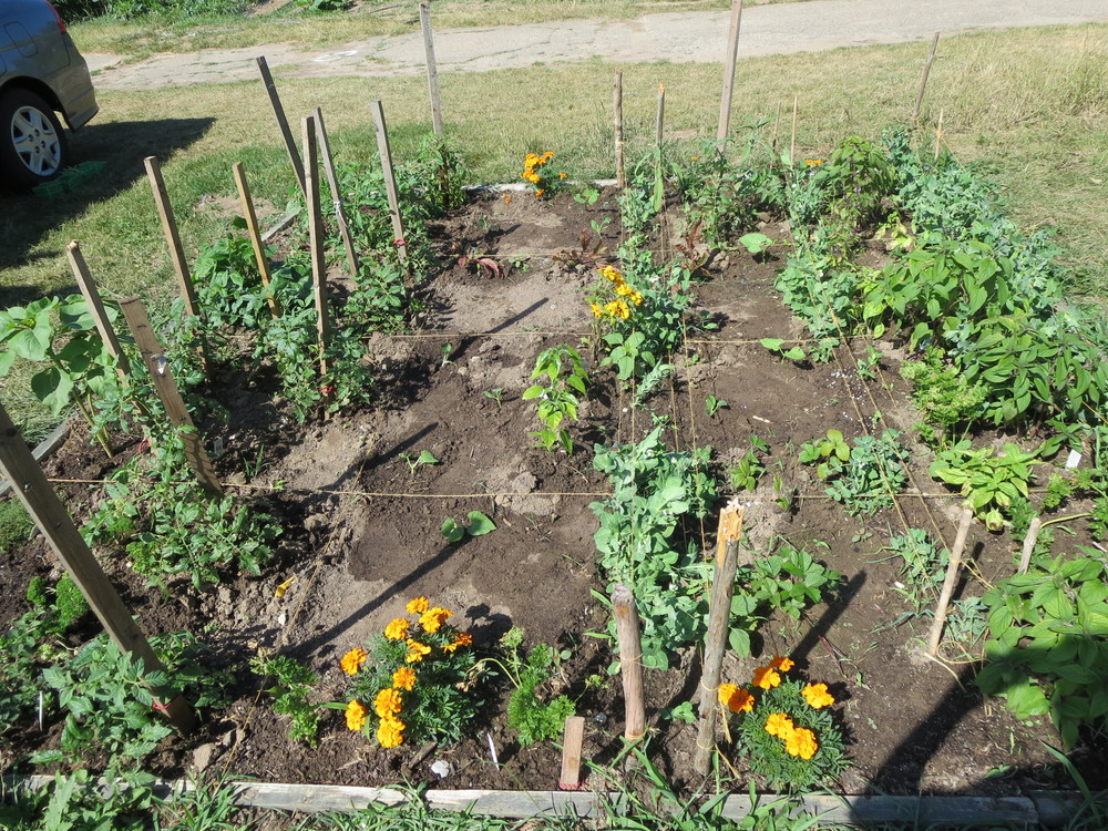 071816_Trying out Square Foot Gardening.JPG