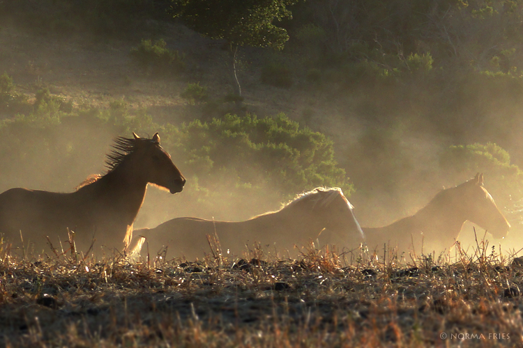 "WH146: ""Wild horses sunset run"""