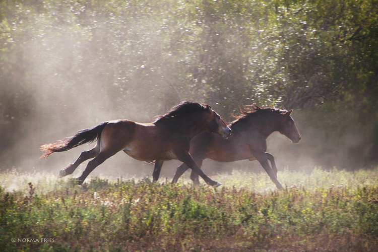 "WH163: ""Stallions' morning run"""