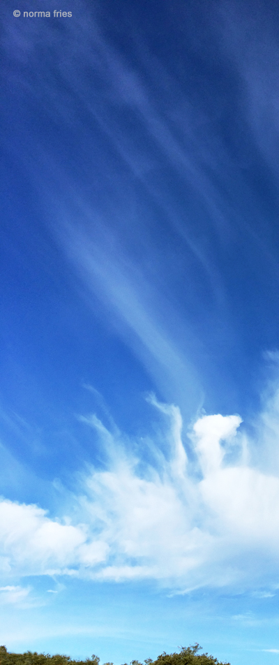 """LN910: """"Sky"""""""