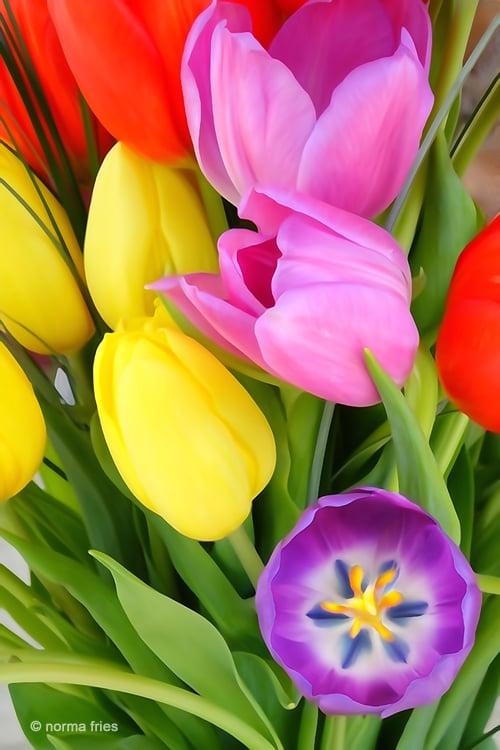 "XX1016"" ""Tulips"""