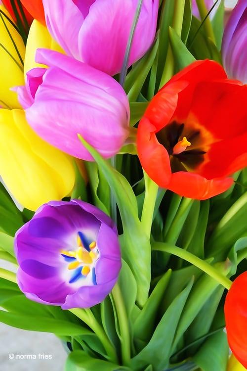 """XX1017: """"Tulips II"""""""