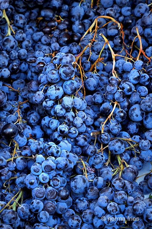 FR417 - Paris: grapes at market