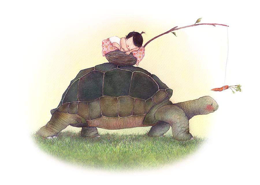 turtle_900.jpg