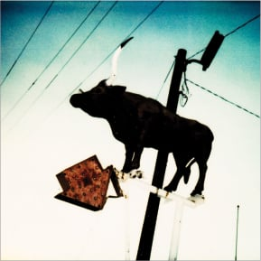 Longhorn on Pole