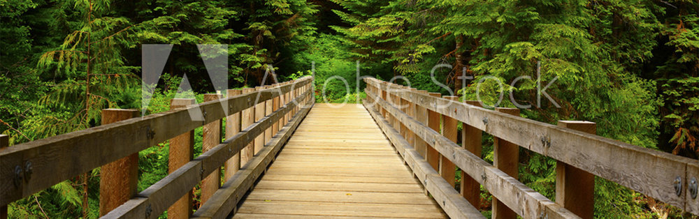 a picture of an Pacific Northwest forest trail-wide.jpg