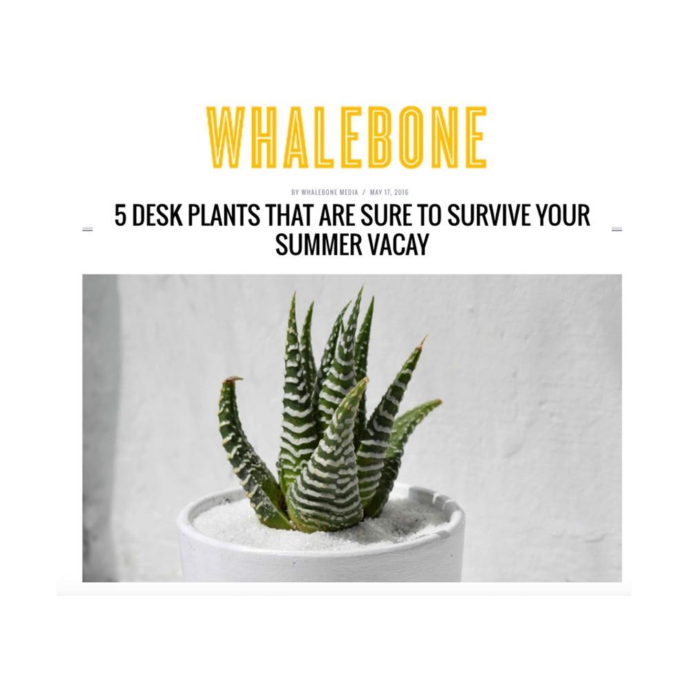 Whalebone Magazine, May 2016
