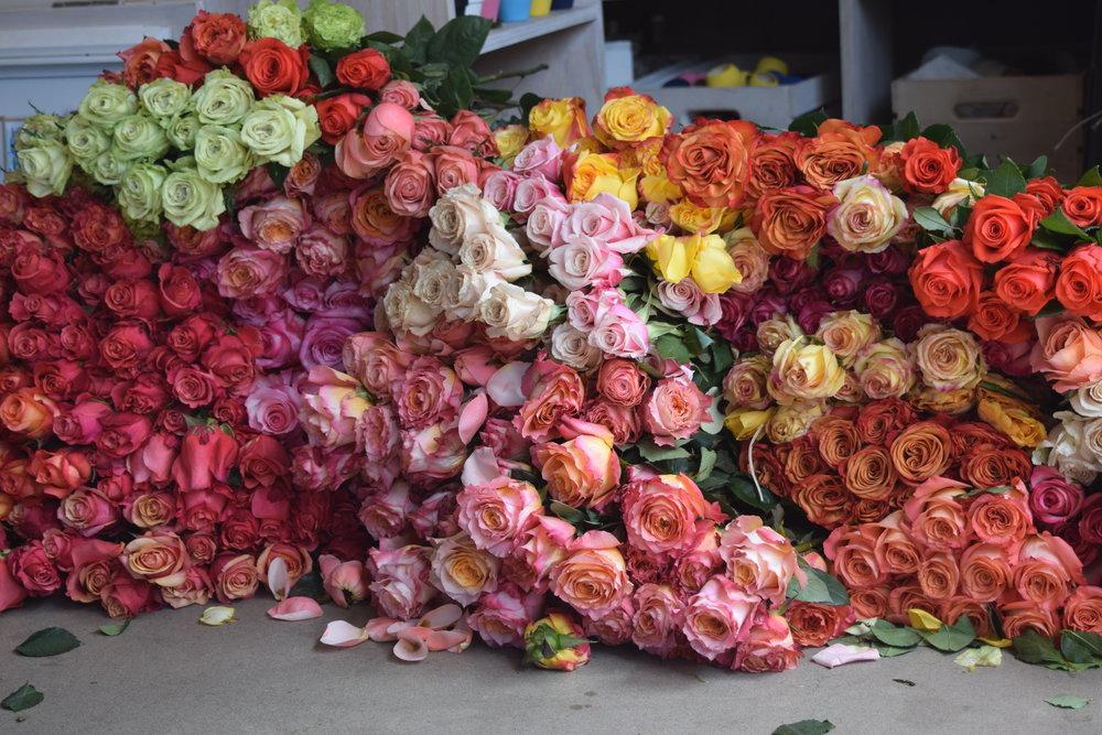 1,000 roses at POPUPFLORIST