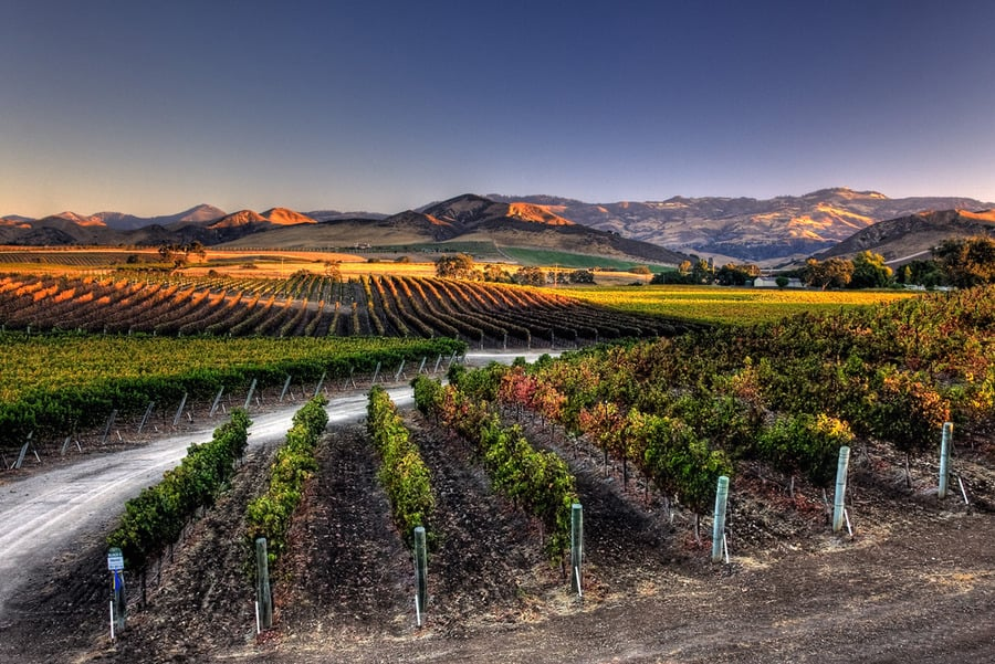 wine-sy-sunset.jpg