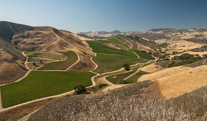 Next to the winery in happy canyon is 200 acres of PRISTINE vineyards tucked into the san rafael mountains - This is the hottest corner of Santa Barbara County