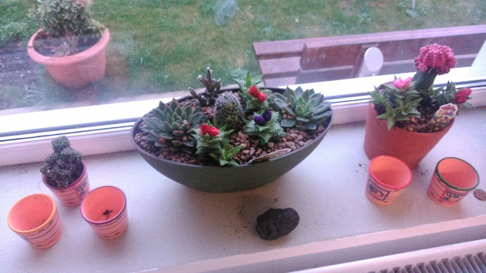 Our new cactus garden thanks to Jody Price……a touch of Mexico to brighten our day:-)