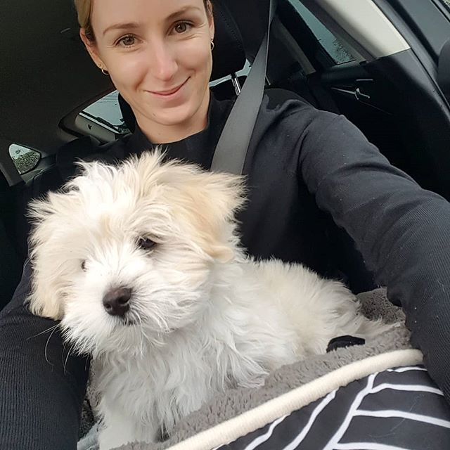 Everyone, meet Kobi 💕💕 our newest family member 🐕 I've never been a dog mum before so if you have any tips for me I'd love to hear them all! 😊 . . . . . . . #lovelife #gratitudedaily #wellnessblogger #grateful #dogmumlife #dogmumma #babesinbizz #happiness #weekendvibes #mindbodyself #abundancemindset #createthelifeyoulove #highvibes #goddessrising #soulmedicine #happyvibes #livelifehappy #livemore #livenow #lovelifeoutside #liveauthentic #thehappynow #livethelittlethings #mylover